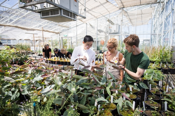 BEES Honours students in Glasshouse